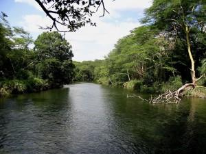 Árboles a orillas de un río
