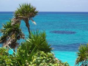 Postal: Plantas cerca del mar azul