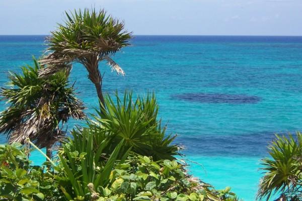 Plantas cerca del mar azul