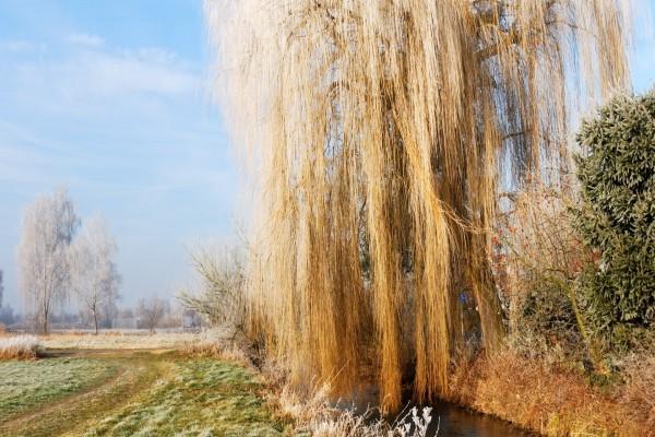Árbol seco en invierno