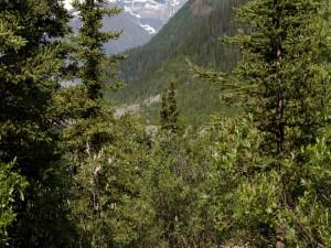 Árboles en la montaña
