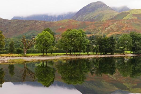 Árboles entre el agua y la montaña