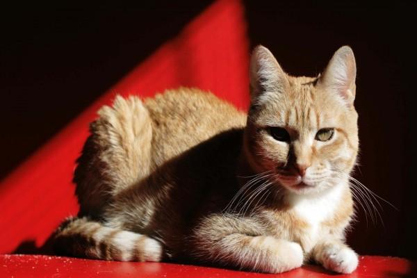 Un gato iluminado por el sol