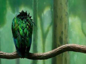 Plumas verdes de un pájaro