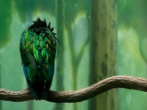 Postal: Plumas verdes de un pájaro