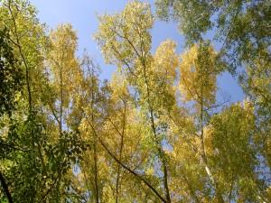 Postal: Árboles y el cielo azul