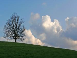 Un árbol sin hojas en la hierba verde