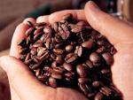Granos de café en las manos