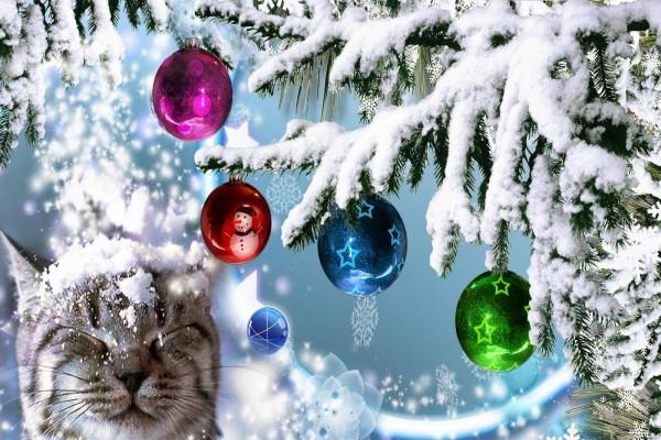 Un gato bajo un árbol de Navidad nevado