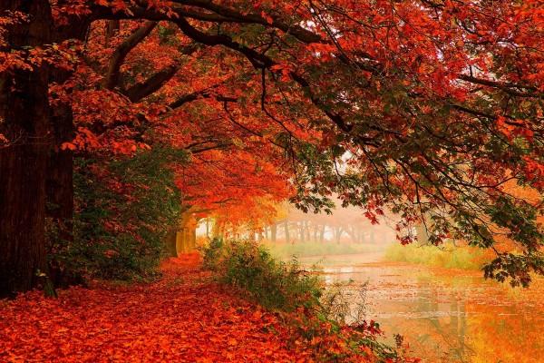 Árboles en el bosque junto a un río