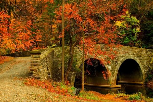 Un camino y un puente con hojas caídas