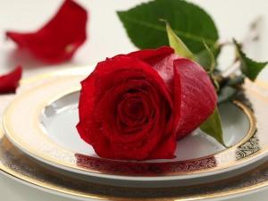 Postal: Rosa sobre un plato