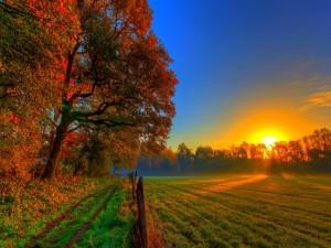 Puesta de sol en un prado