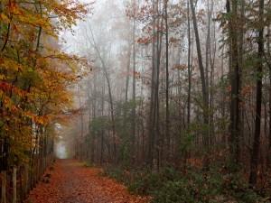 Paseo por el bosque en otoño