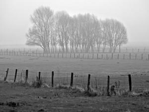 Foto de árboles en blanco y negro
