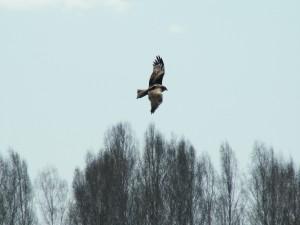 Postal: Gran ave en vuelo