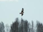 Gran ave en vuelo