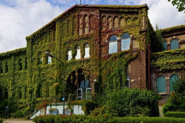 Plantas en las paredes del edificio
