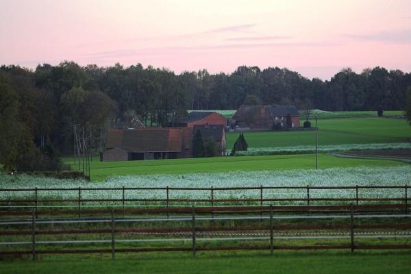 Casas en la hierba verde