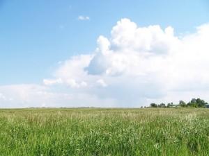 Postal: Nubes blancas y un campo verde