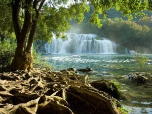 Cascada y las raíces del árbol