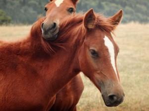 Dos caballos amigos