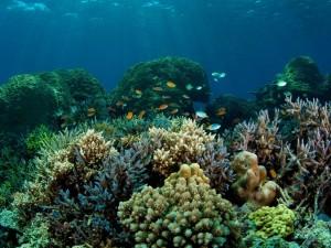 Postal: Interesante fondo de mar