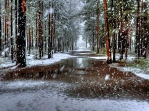 Postal: Nieve cayendo en el bosque