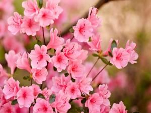 Flores con pétalos rosa