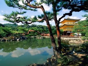Postal: Pino junto al templo Kinkaku-ji, Japón