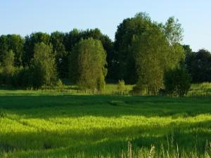 Postal: Prado verde junto a los árboles
