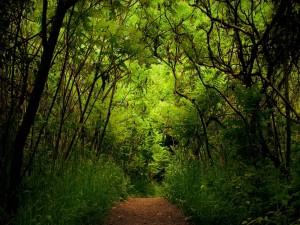 Postal: Paseo por el camino del bosque verde
