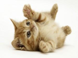 Postal: Gatito juguetón