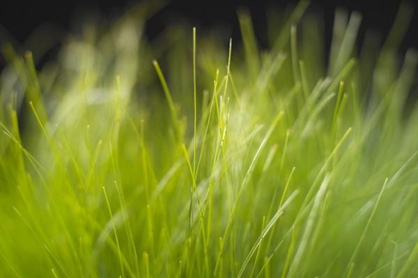 Finas tiras de hierba