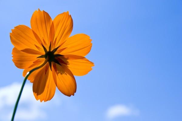 Tallo de una flor naranja