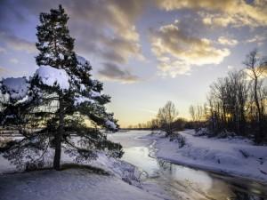 Río, árboles y nieve