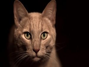 Mirada penetrante de un gato