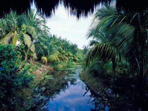 Postal: Pequeño río con palmeras