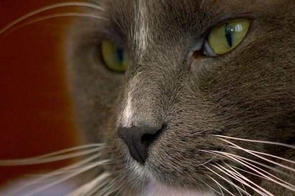 Los bigotes del gato