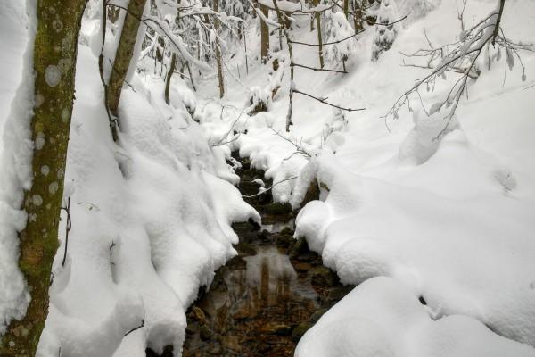 Bosque cubierto de nieve