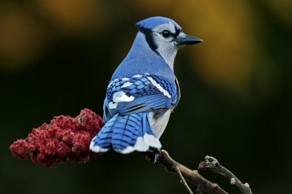 Pájaro de plumas azules sobre una rama