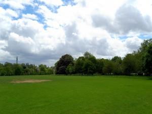Pradera verde con árboles