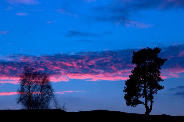 Franja de nubes y dos árboles