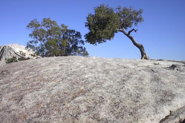 Arbolito sobre una piedra