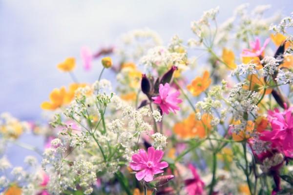 Flores silvestres de varios tipos