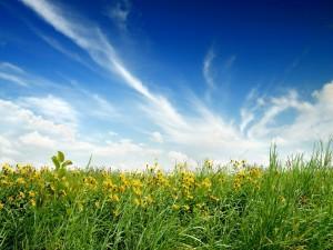 Flores amarillas y hierba