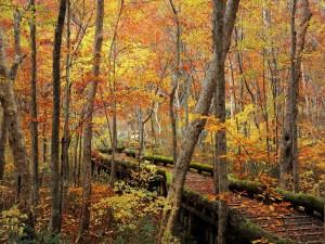 Parque en otoño