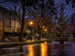 Postal: Árbol de Navidad en la calle
