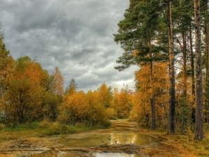 Camino con charcos entre los árboles