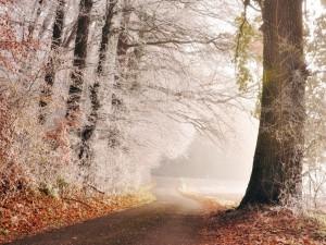 Bosque y carretera helados